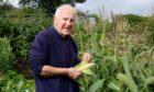 John checks his sweet corn