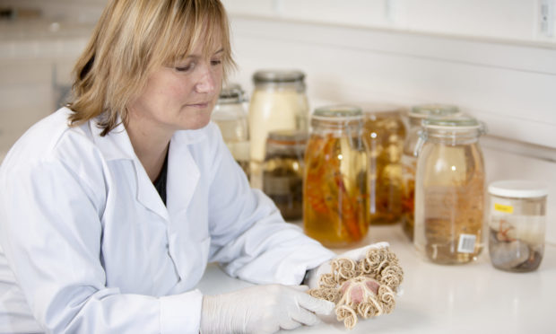 National Museums Scotland curator of Invertebrate Biology Fiona Ware, with one of her specimens