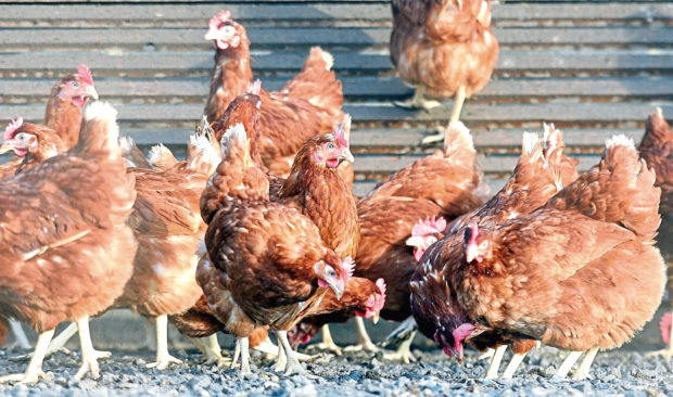 WARNING: There have been outbreaks of avian influenza in wild and domestic birds.