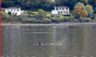 A northern bottlenose whale near HMNB Clyde at Faslane in the Gare Loch.