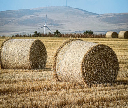 ON A ROLL: The census said 2020 was good for cereals – with a predicted rise in yield
