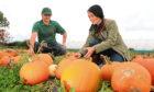 Cairnie Fruit Farm outdoor manager Radu Moldovan helps Gayle Ritchie to pick a pumpkin.