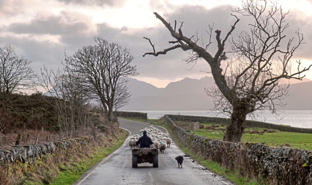 WRONG DIRECTION: The UK farming sector is under threat, campaigners warn.