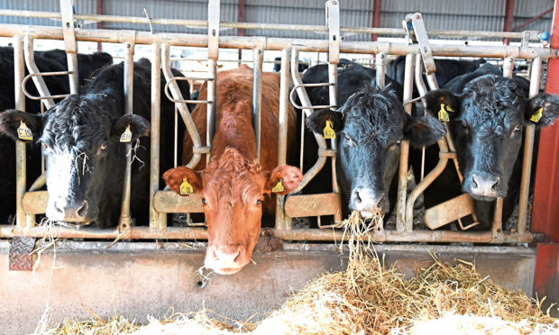 A contingency plan will ensure stock is cared for if farmers catch Covid-19