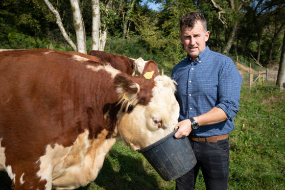 Welsh rugby referee Nigel Owens  is the owner of 35 Hereford cows.