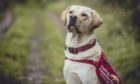 Ivan is a two-year-old Labrador-golden retriever cross.
