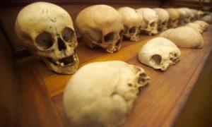 Skulls in the Old Edinburgh University Anatomy Museum circa 2004