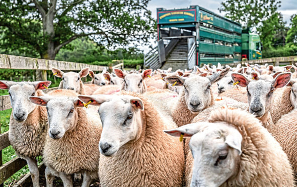 TOP QUALITY: The farming industry is concerned that any future trade deals after the Brexit transition period could undermine the UK's high health and welfare standards.