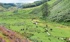 CHANGE: Researchers at the James Hutton Institute are developing a transformation plan for their upland research farm, Glensaugh.
