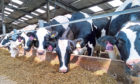 ANALYSING IMPACT: Soya was removed from the feeds of three of SRUC's dairy herds.