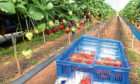Concerns: AHDB is holding discussions on the future of its horticulture operations.