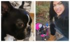Owner Michelle Morris has offered a £2,000 reward for the return of her runaway Boston Terrier.