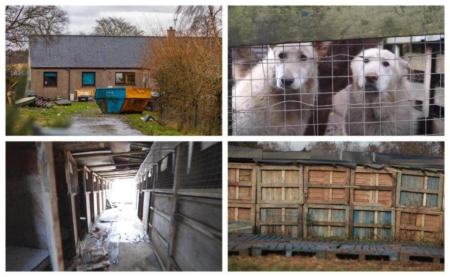Glenalmond puppy farm.