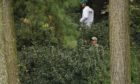 Rory McIlroycaddie Harry Diamond look for his ball in the bushes on the 13th hole.