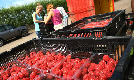 Farms in Scotland have said they need 10,000 seasonal staff for six to nine months of the year.