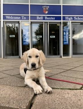 Bell Baxter High School's therapy dog Bella.