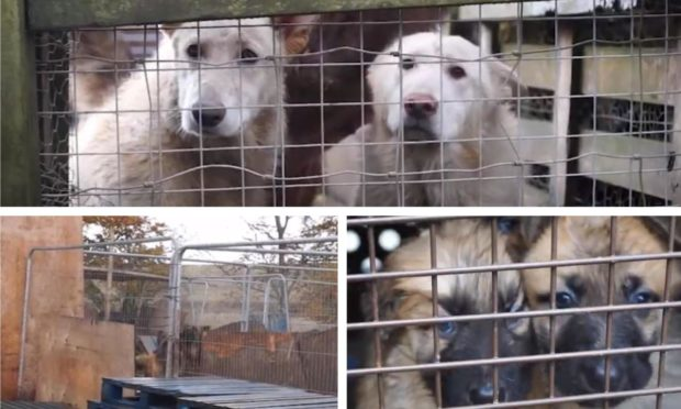 Some of the animals seized from the property in Perthshire.
