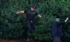 Bryson DeChambeau emerges from the bushes after searching for his ball on the 13th.