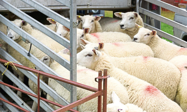 LIVESTOCK: UK Government proposals would prevent unnecessary suffering of animals during transportation.