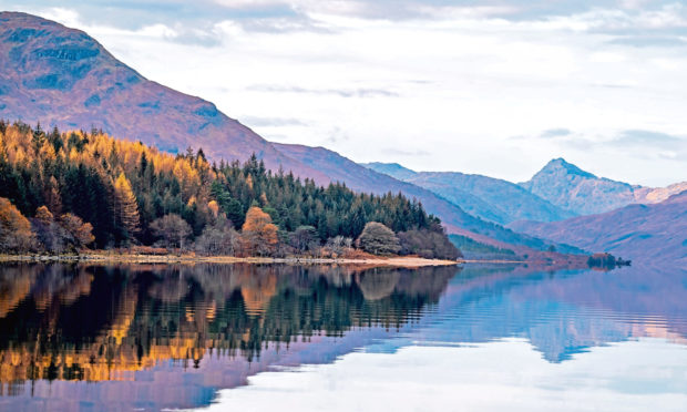 SCENIC: Experts are collaborating to restore the stunning Loch Arkaig pine forest.
