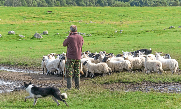 FREEDOM: Planned new legislation will allow tenant farmers more scope to dispose of their holding when they retire.