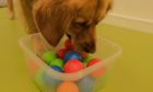 Georgie picks the balls from a container.