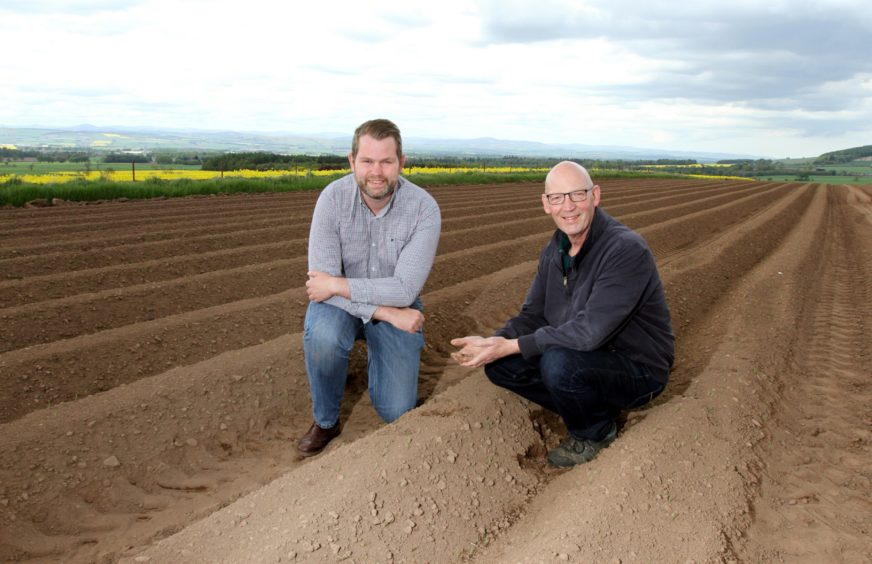 seed potato grower Sandy McGowan