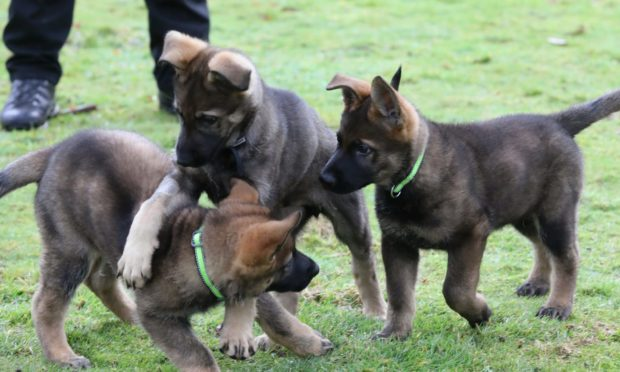 Kim, Fury and Kai get put through their paces in Perthshire for Tayside Police