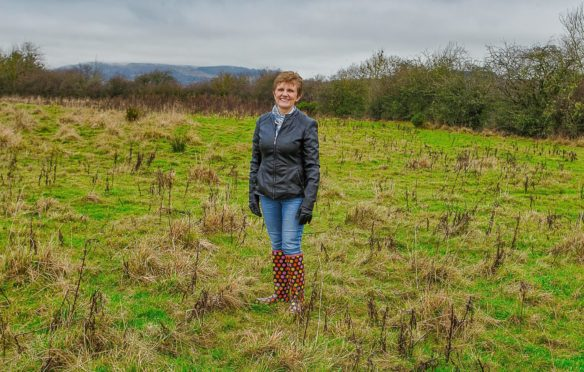 Councillor Judy Hamilton at the site of the new Minto Woodland.
