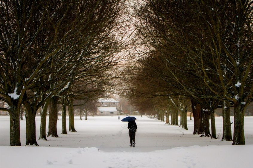 A person walking through the South Inch in the snow on March 1 during the Beast from the East.