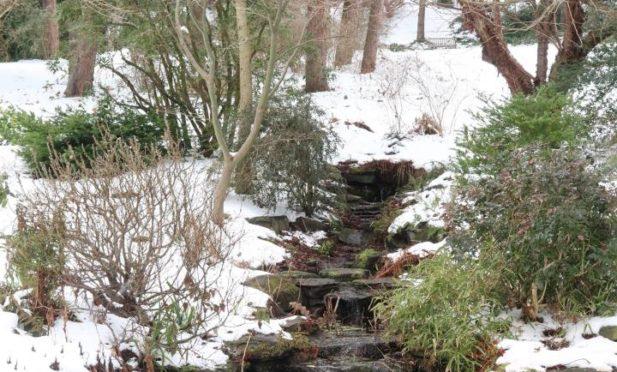 University of Dundee Botanic Garden in winter.