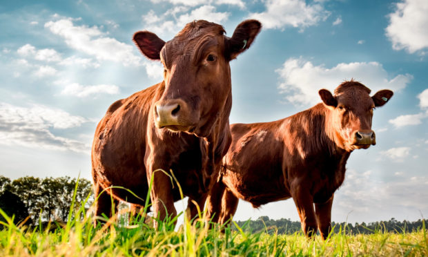 LIVESTOCK: QMS found a general reduction in emissions output per kg of beef or lamb.