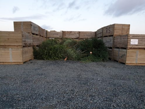 The pile of trees at Bowhouse.