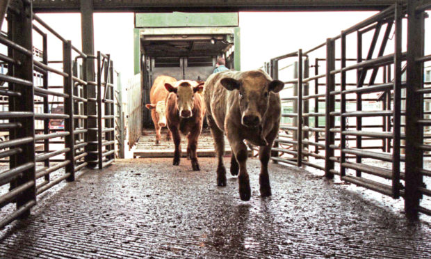 FOLLOWING GUIDELINES: Scottish auction marts are to keep functioning during lockdown using stringent protocols.