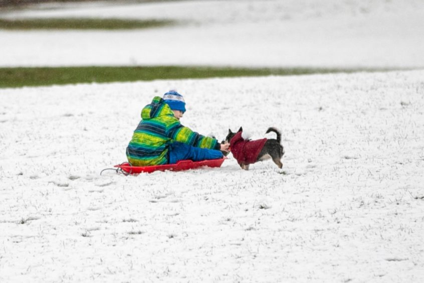 Locals enjoy the snow at Camperdown Park.