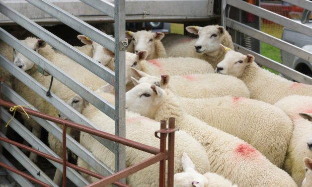 Almost 40% of Scottish sheep are not meeting market specifications.