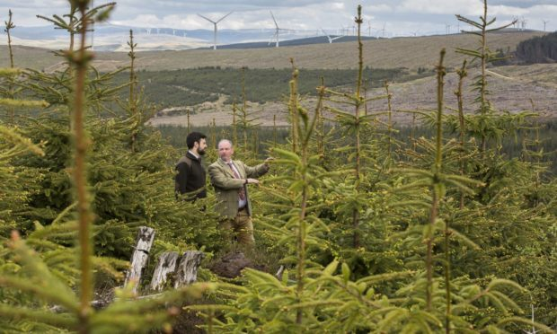 Raymond Henderson and Andy Turnbull from Bidwells examine forestry assets.