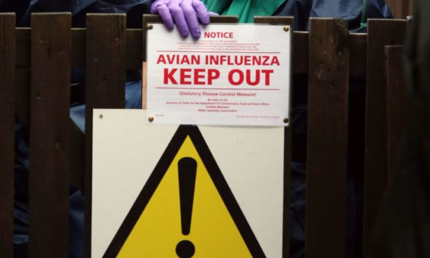 Bird flu stock image