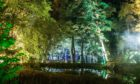 The Enchanted Forest