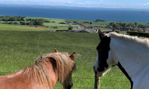 The horses live at Largo Law.