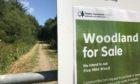 Five Mile Wood