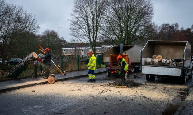 A fallen tree blocking Catmoor Road in Scone.