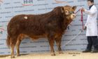 Pointhouse Paul topped the sale at 42,000gn.