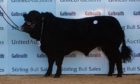 Cairness Paavo topped the sale at 11,000gn.