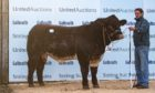 Meonside Nidavellir set a new breed record when he sold for 27,000gn.