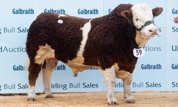 Pistyll Kingsman, a 19-month-old bull from the Francis family made 26,000gns.