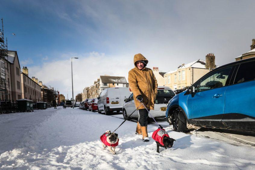 Boab Anderson walks his pugs Yoko and Bonsai on Clepington Road.