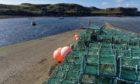 Scottish shellfish ban