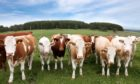 Farmers are asked to look for signs of lead in fields before spring turnout.