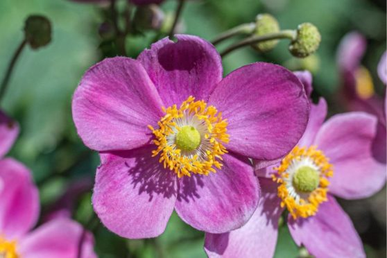 9 Gorgeous Plants to Grow in Your Garden